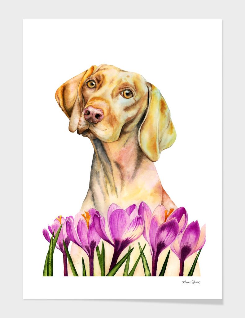 Angelic   Vizsla Dog and Crocus Watercolor Painting