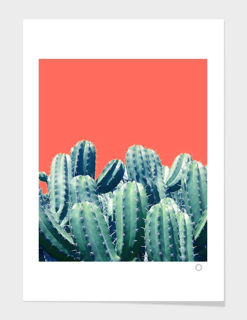 Cactus on Coral