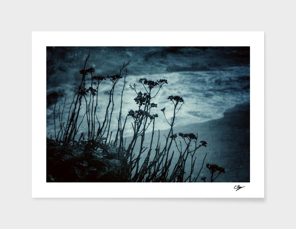 Midnight Dreams of the Sea
