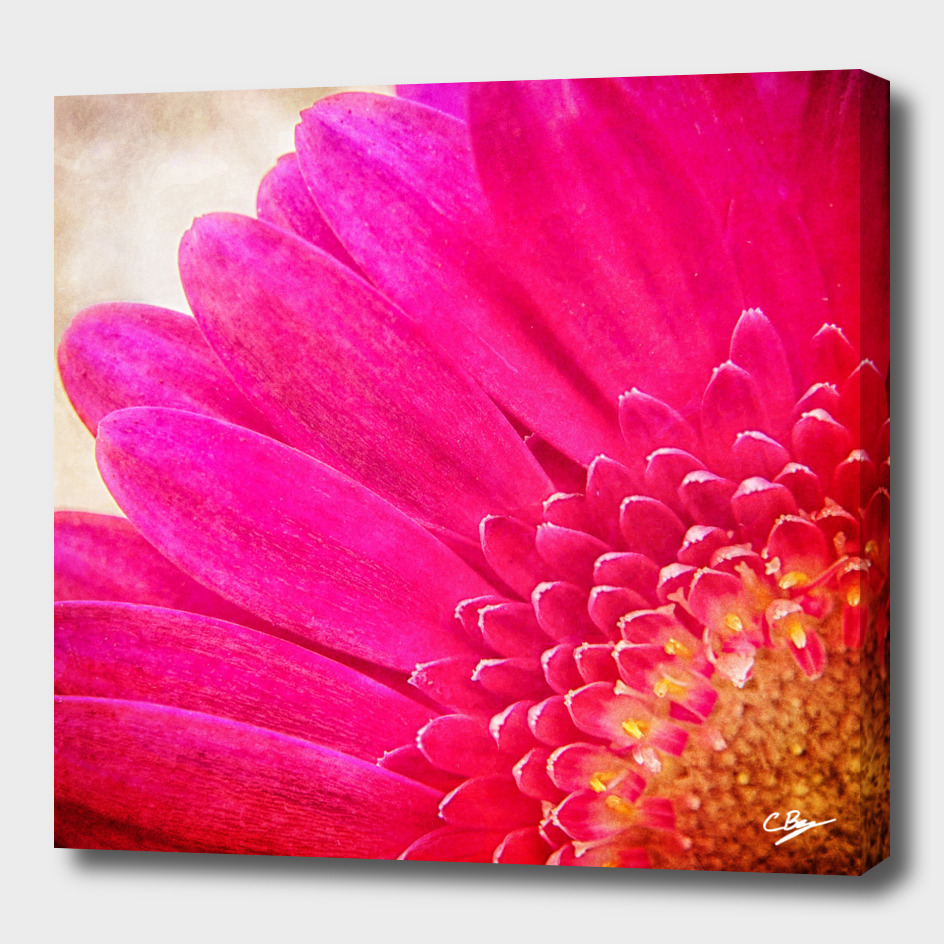 A Burst of Pink