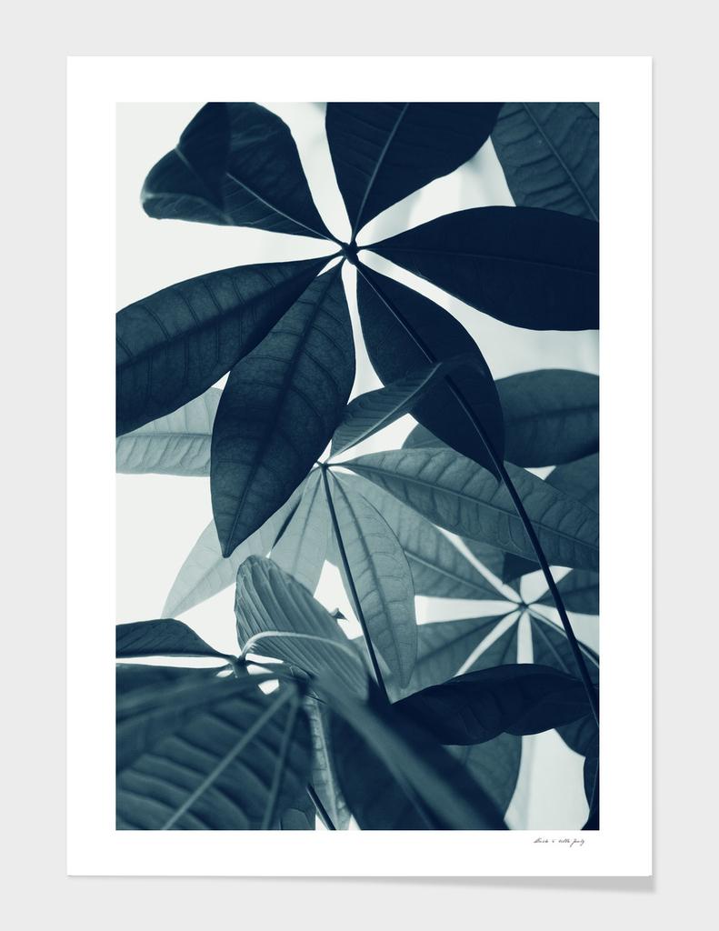 Pachira Aquatica #4 #foliage #decor #art