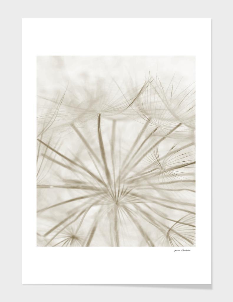 Dandelion Neutral Close-up