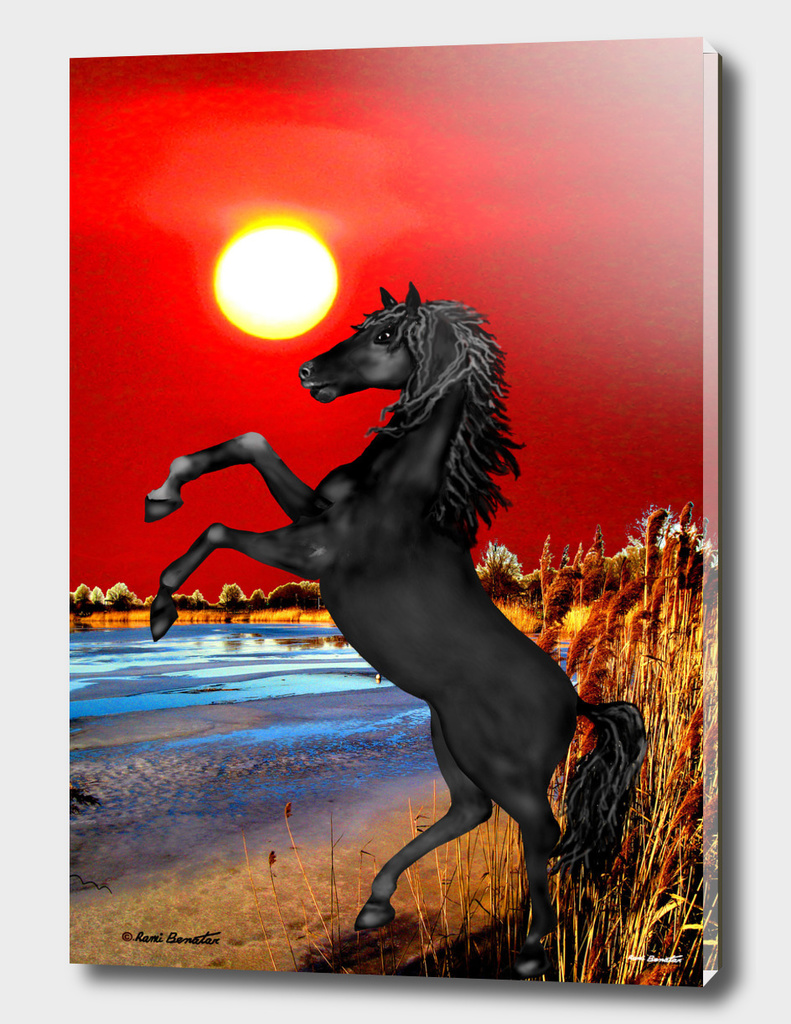 Black Wild Horse at Sunset