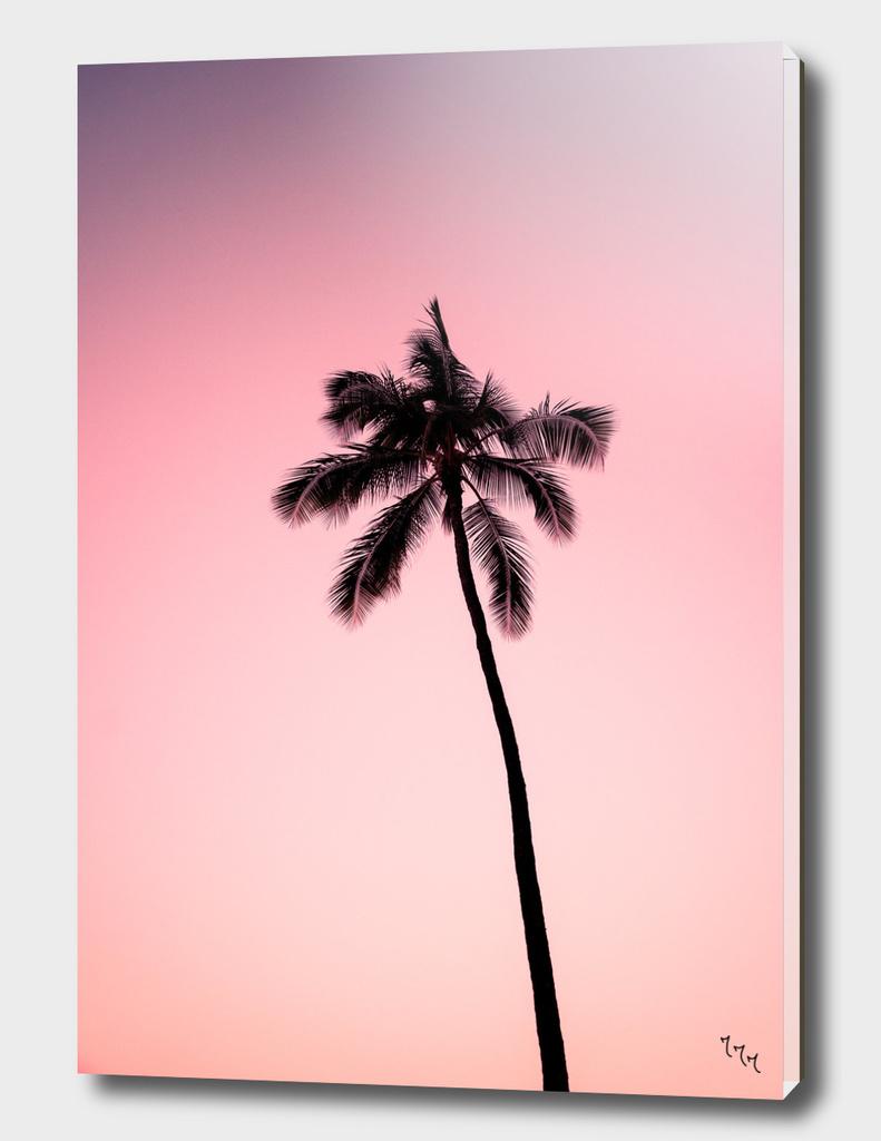 palmtree ver.pink