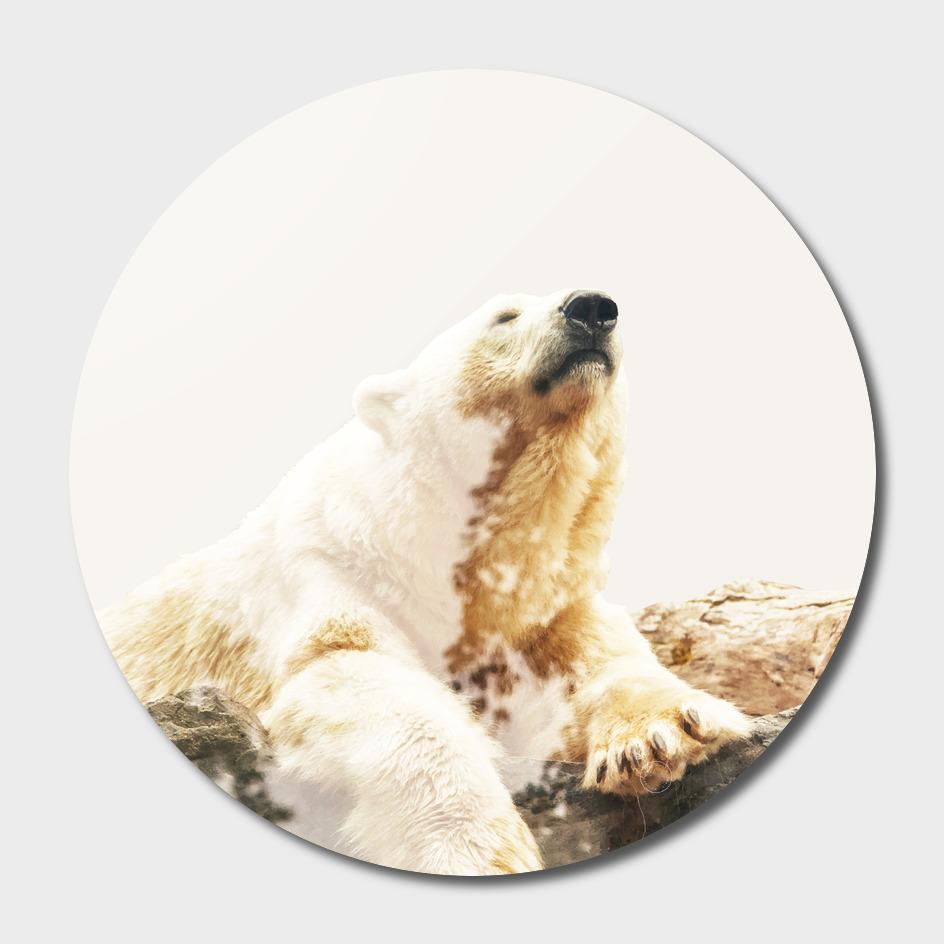 Bear a Charmed Life