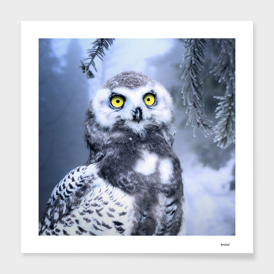 Owl In Icy Woodland