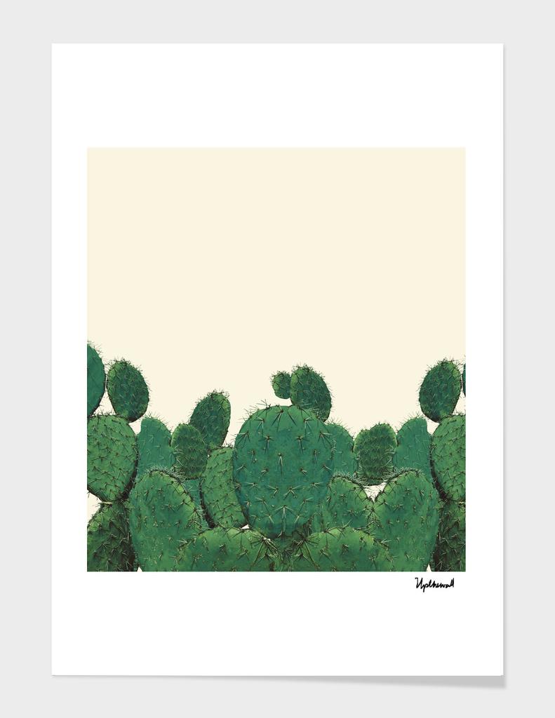 Wall Of Cacti