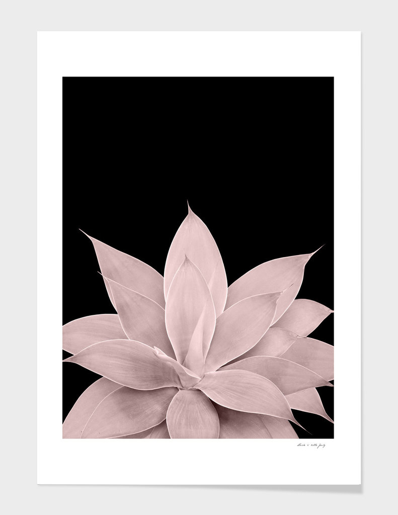 Blush Agave on Black #1 #tropical #decor #art