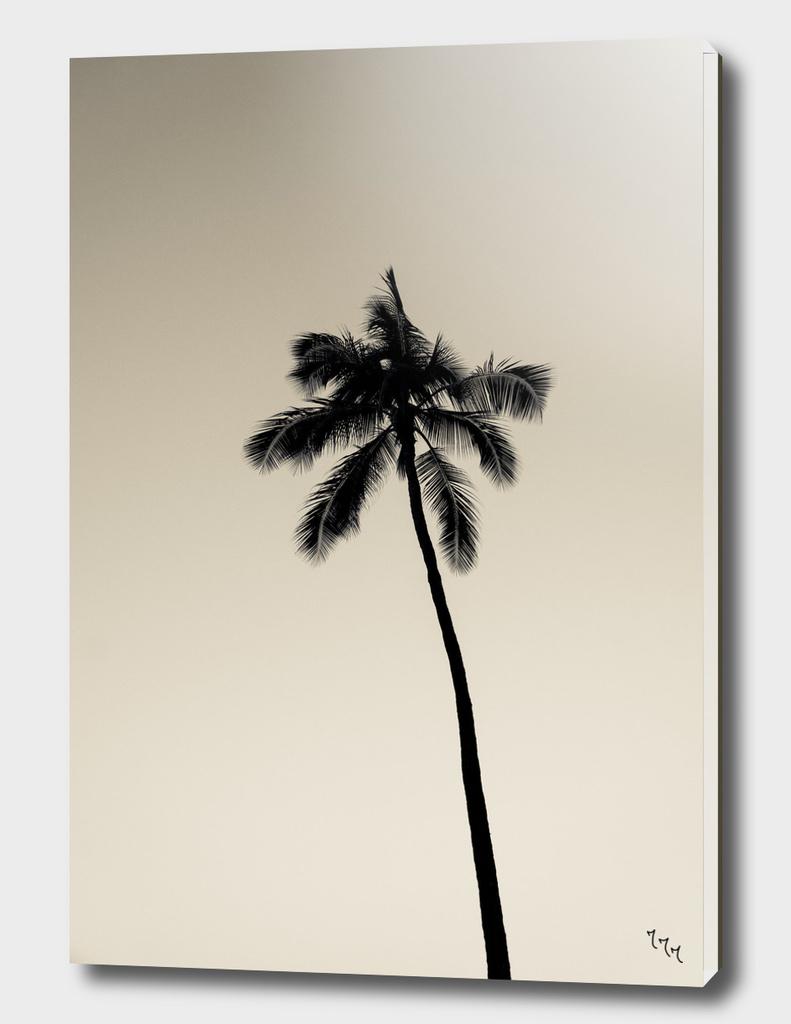 palmtree ver.coffee