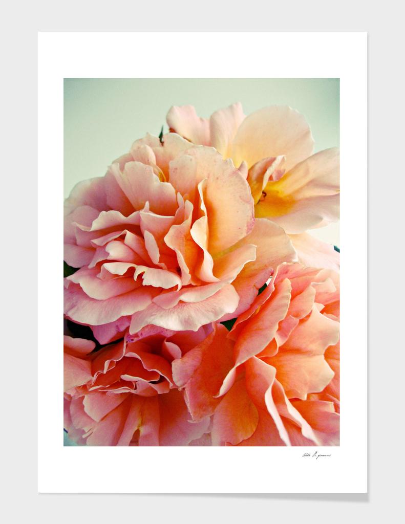 Ethereal petals III