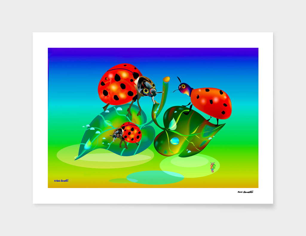 BEETLES Coccinella 2