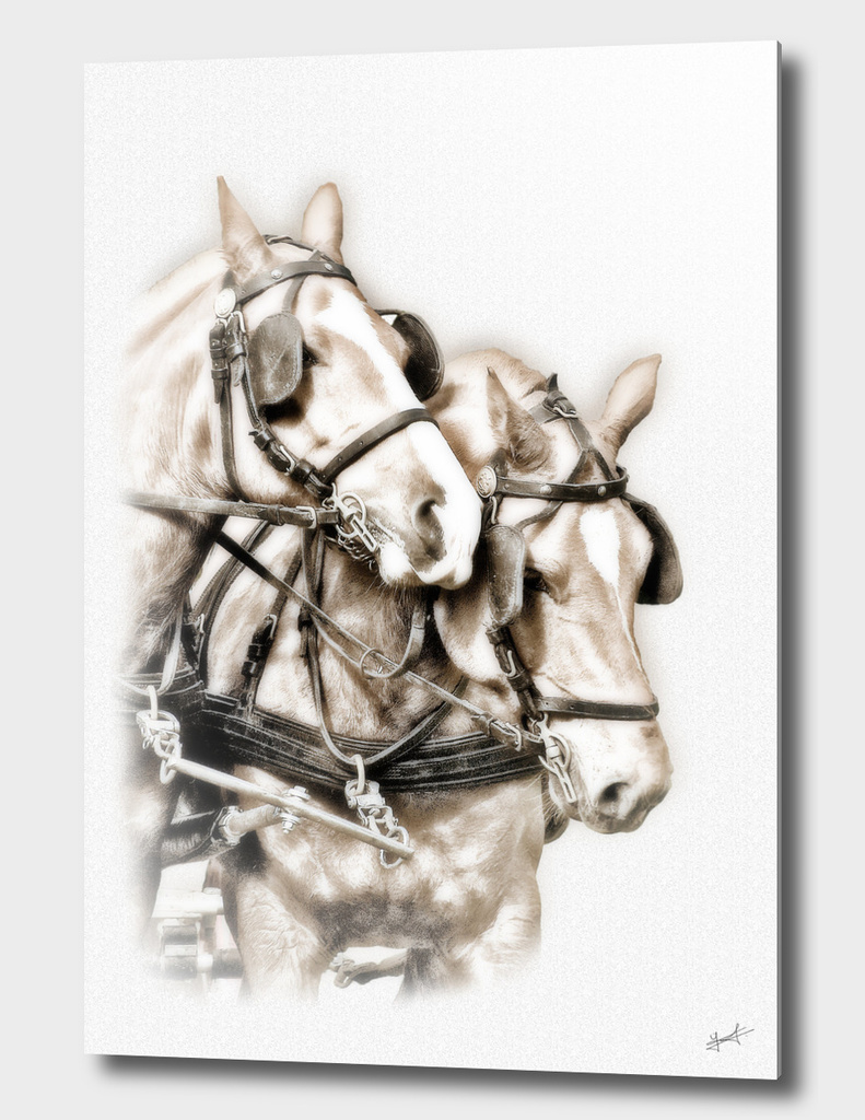 Two hitched horses