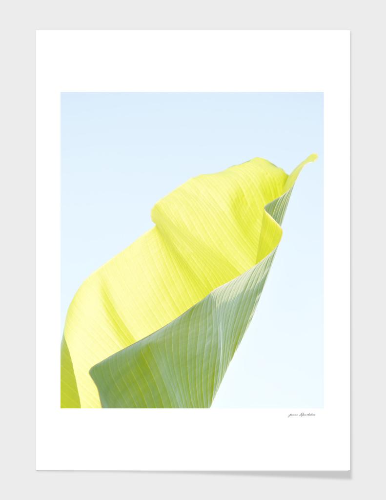 Banana leaf luminous