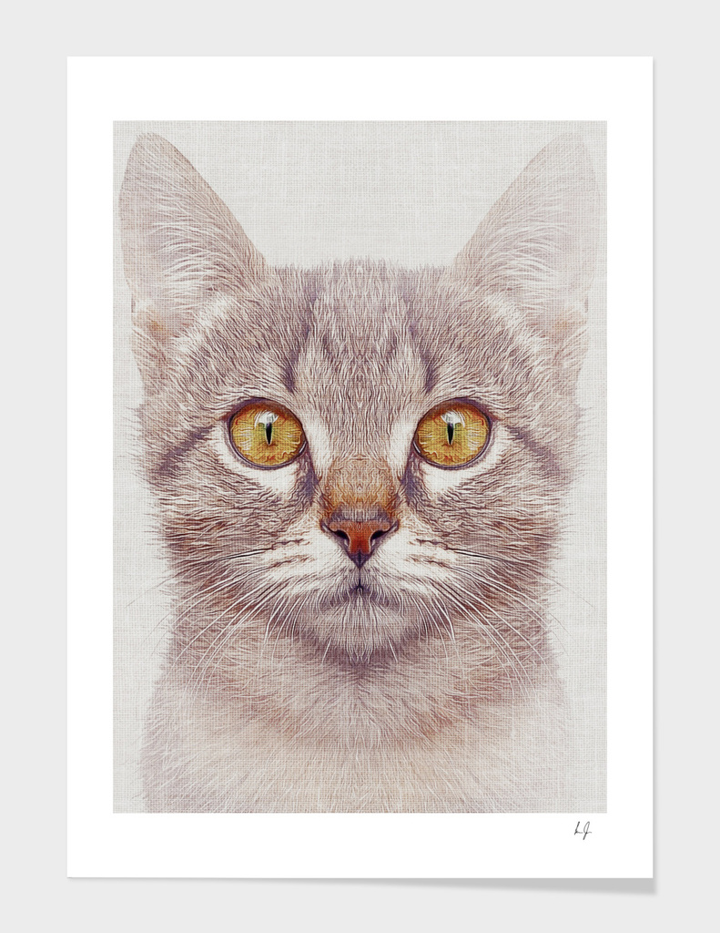 Cat #3