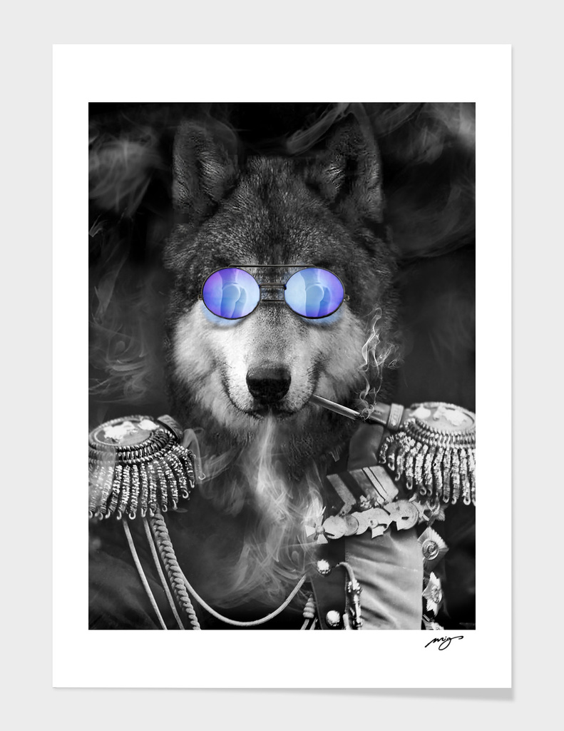 Wolf. Kings series.