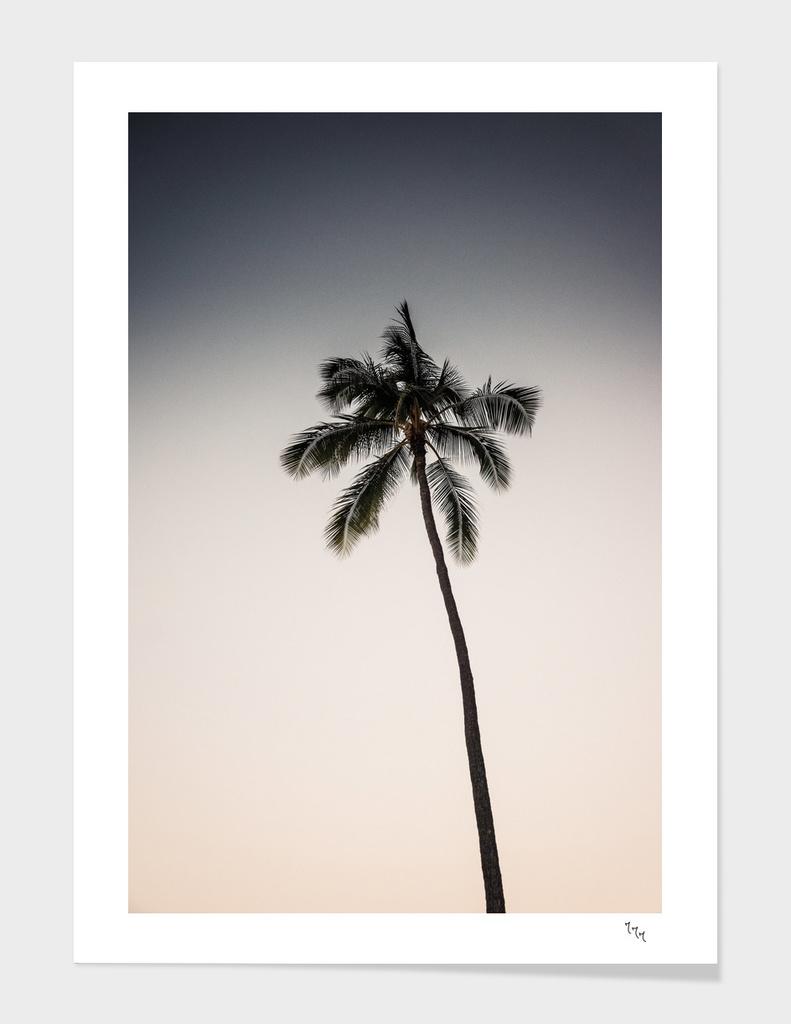 palmtree ver.beige