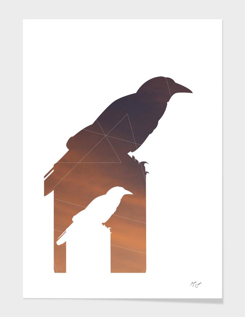 Crow Math – Sunset