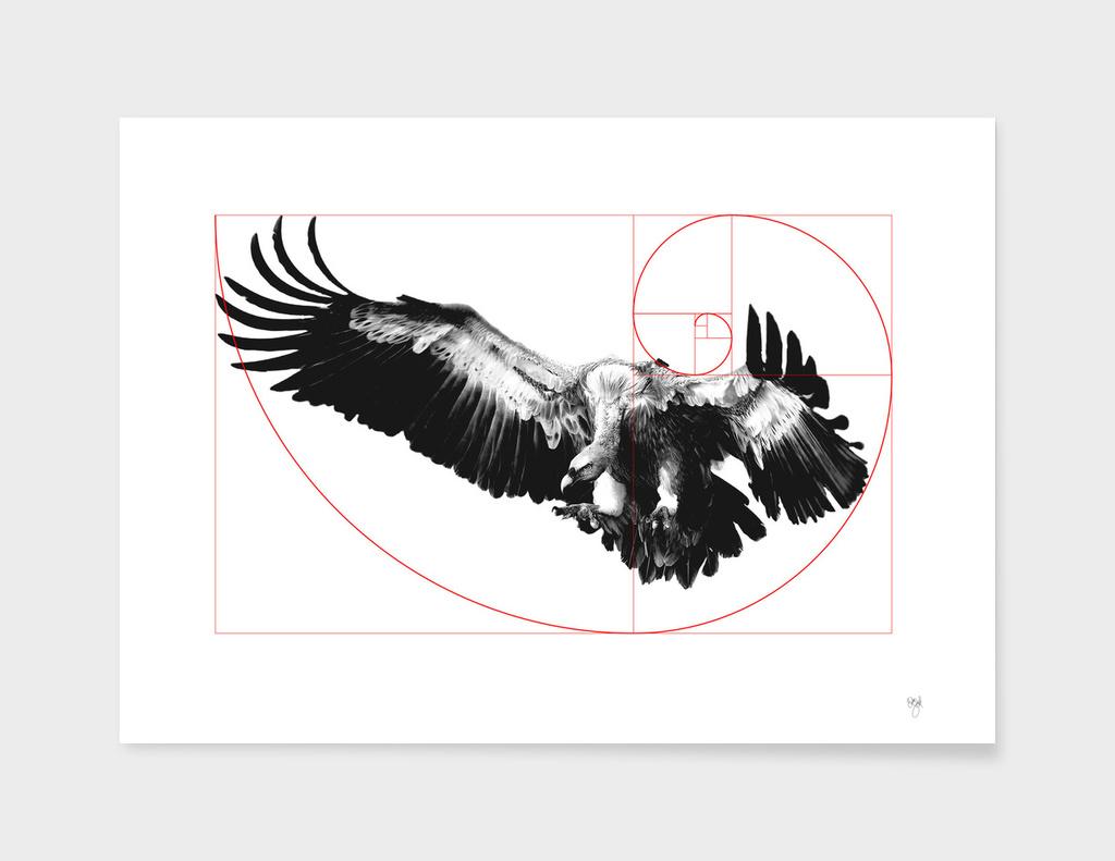 Sacred Vulture
