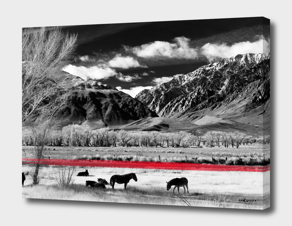The Red Line Of Our Freedom #curioos #wallart