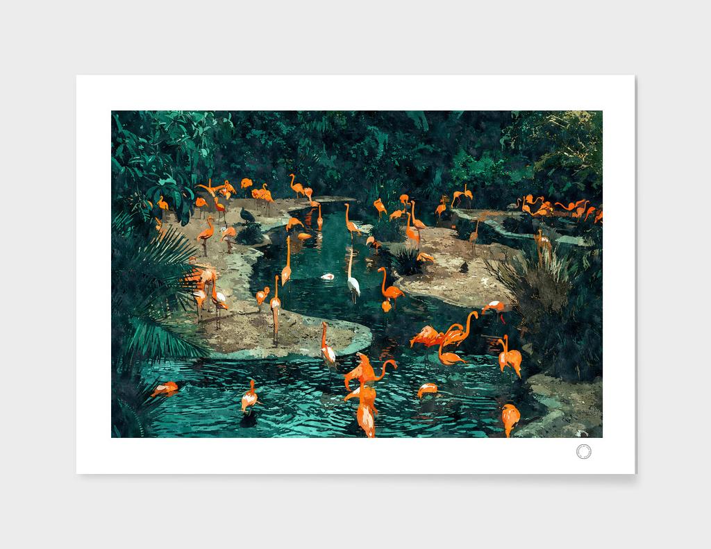 Flamingo Creek