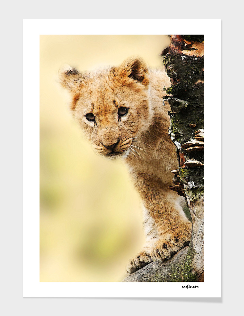 Young Spirit #curioos #wildlife #decor
