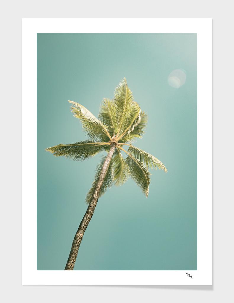 palmtree ver.summer