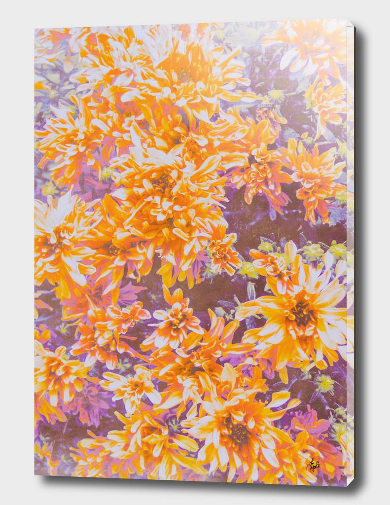 Orange and Purple Mum Flower