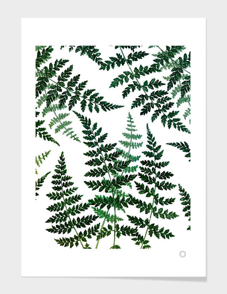 Botanical Bliss