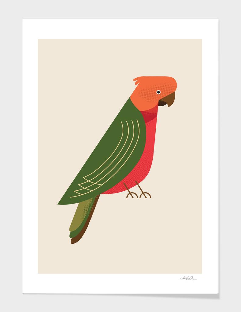 Australian King Parrot, Bird of Australia