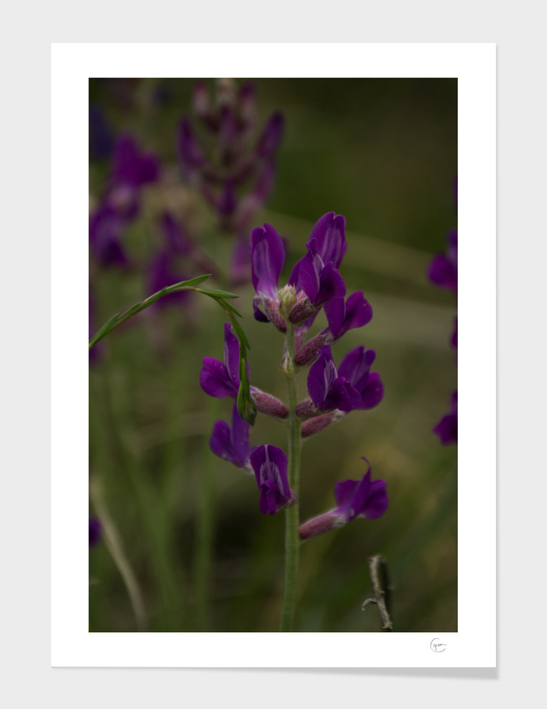 Nordic Flower