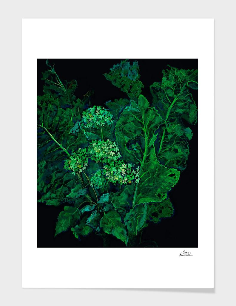 Hydrangea and Horseradish, Black and Green