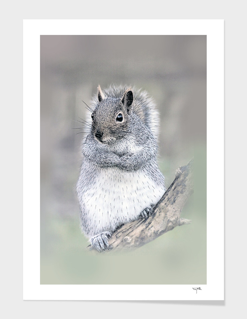 The curios Grey Squirrel.