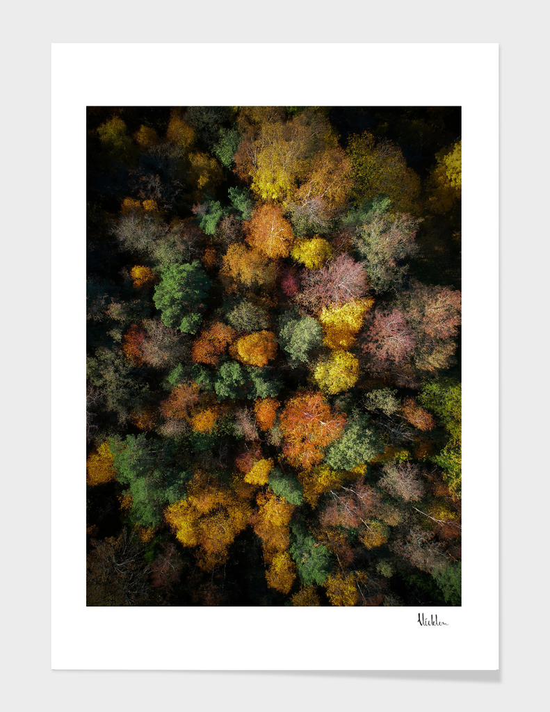 Autumn Forest - Aerial Photography