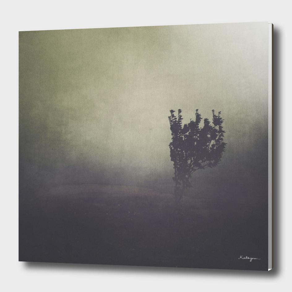 Purple Fog