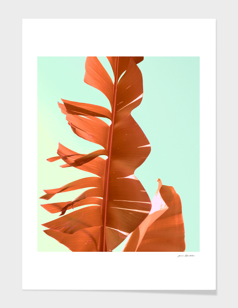 Banana leaf orange portrait