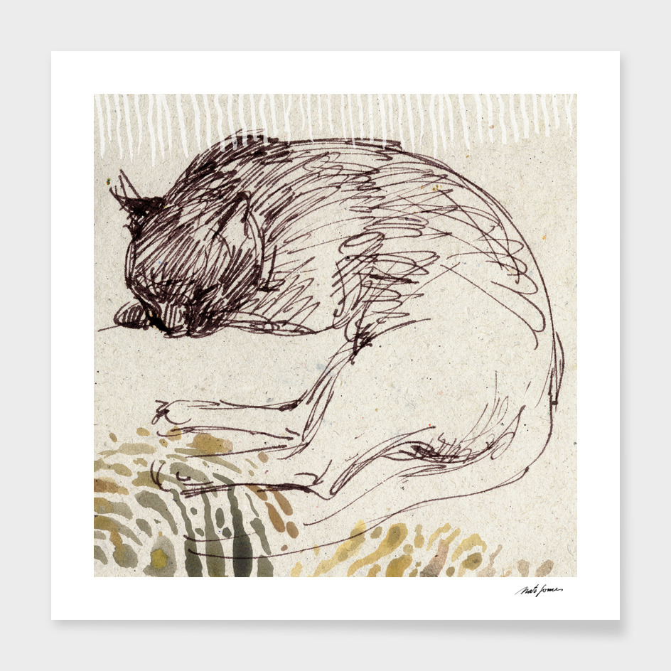 Kitten nap_1