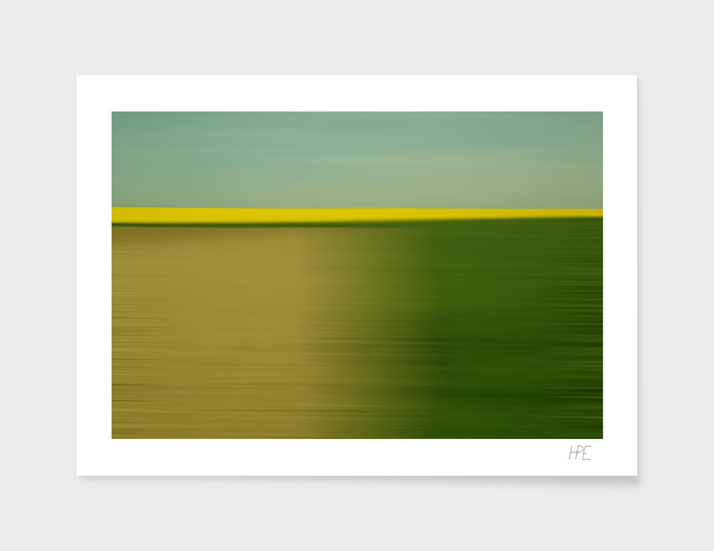 Canola fields Movement