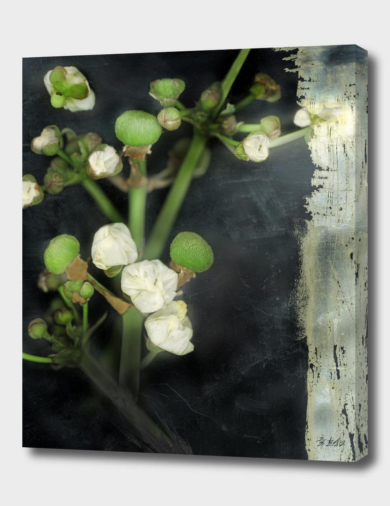 floral plot 2