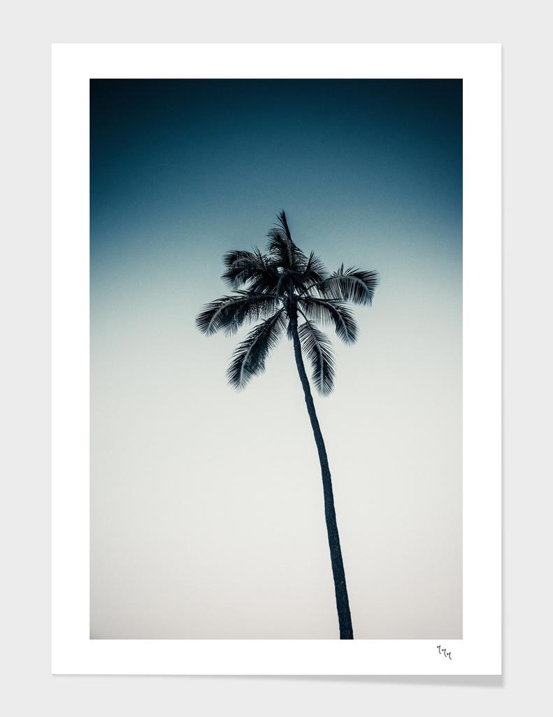palm tree ver.darkgreen