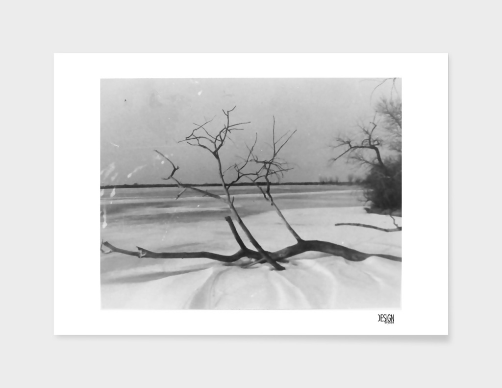 Frozen Tree - Film Photograph