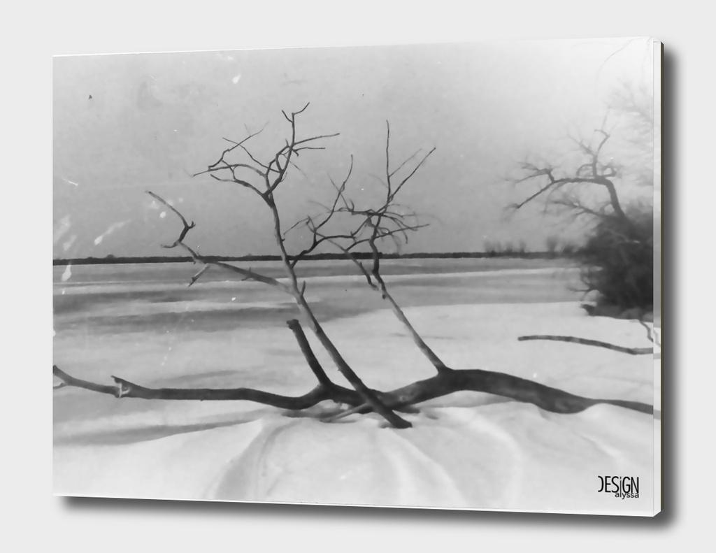 Frozen Tree - Film Photograph