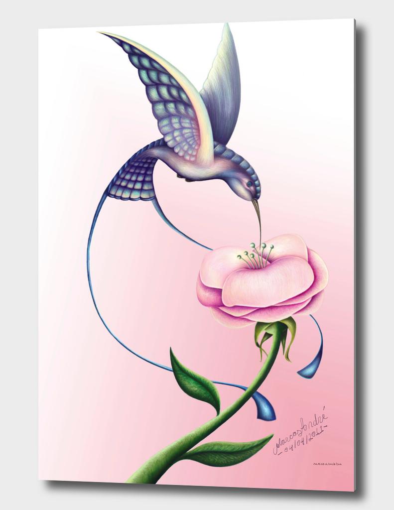 A beleza do beija-flor