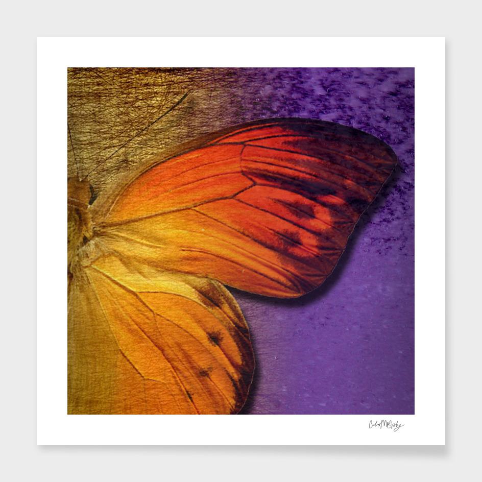 Orange Butterfly Wing