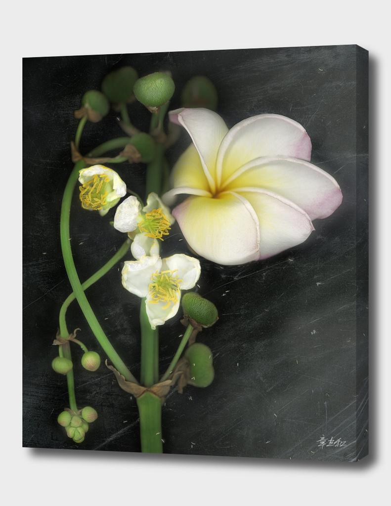 floral plot 4