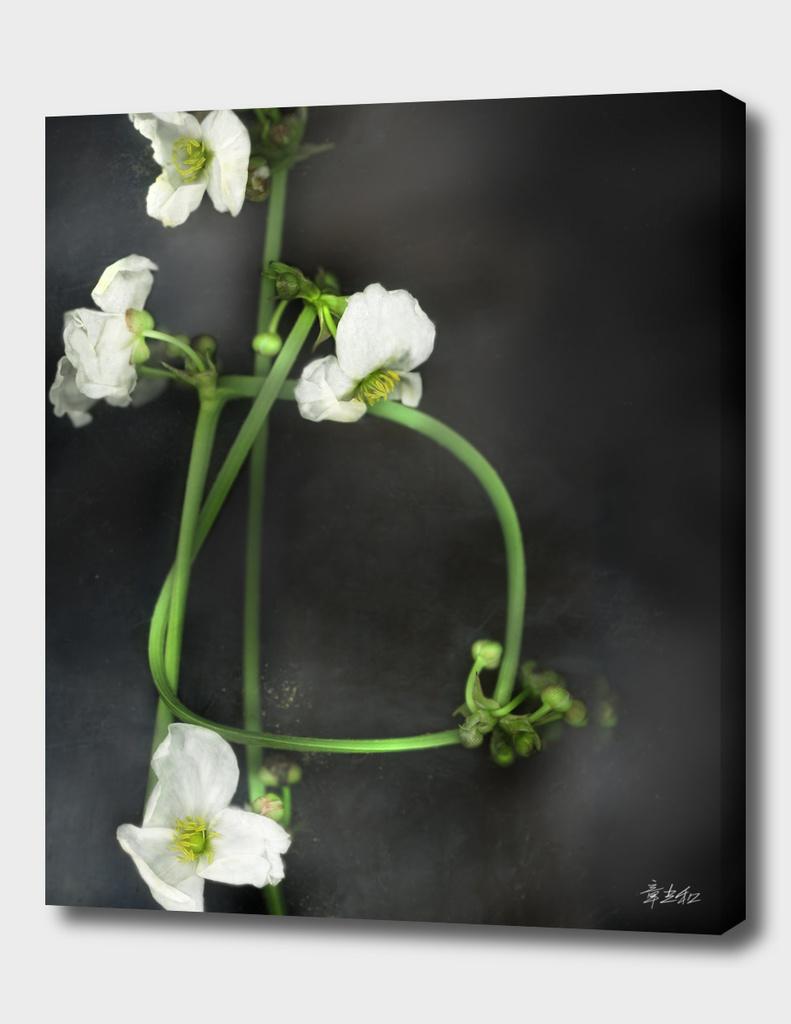 floral plot