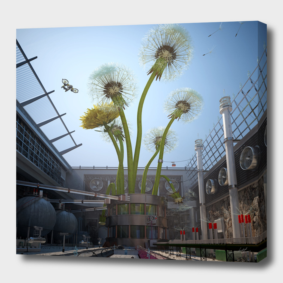 Industry growing dandelions