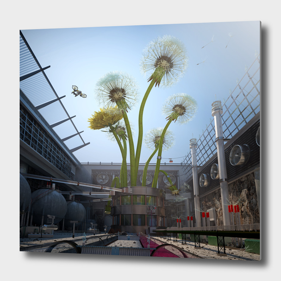 Industry growing dandelions