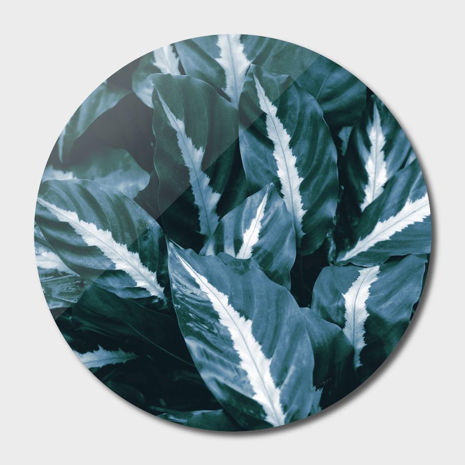 Blue Green Tropical Jungle Night Leaves #1 #tropical #decor