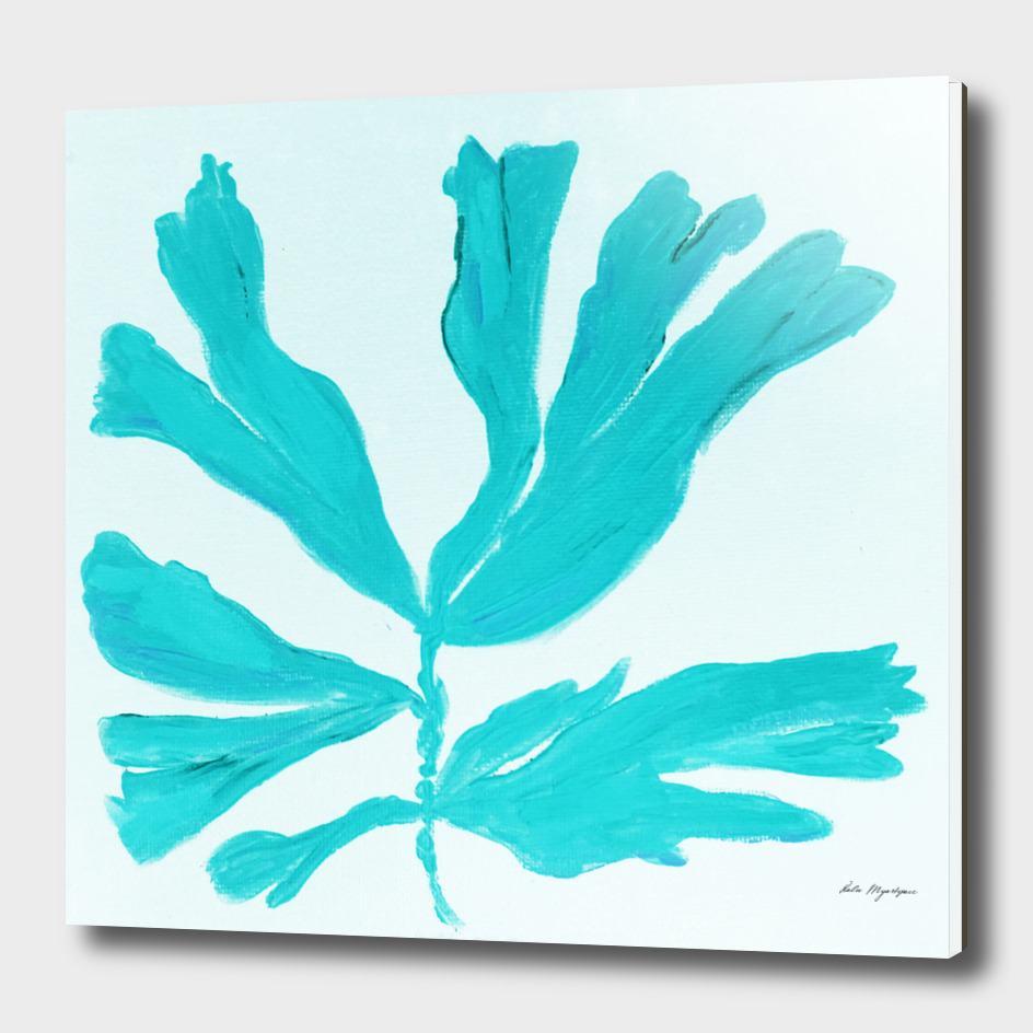 FAN CORAL turquoise