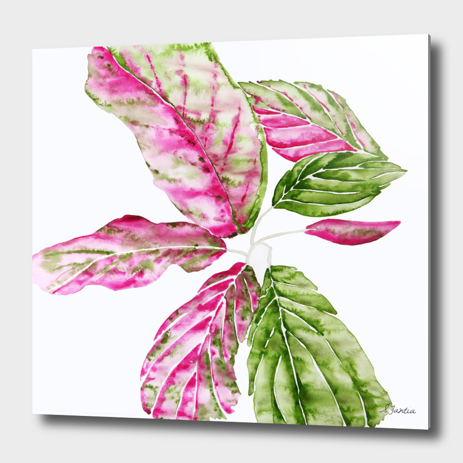 Pink and Green Foliage